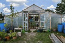 Greenhouse with tomato plants  during daytime — Stock Photo