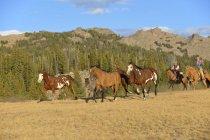 США, Вайомінг, ковбой і пастушка пастуші коней в пустелі — стокове фото