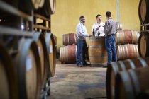 Vignerons, dégustation de vin dans la cave à vin — Photo de stock
