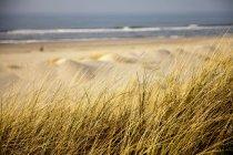 Германия, Нижняя Саксония, Восточно-Фризский остров, Spiekeroog, Дюна с мраморной травой на пляже — стоковое фото