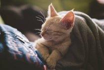 Tabby kitten sleeping on the lap of  woman — Stock Photo