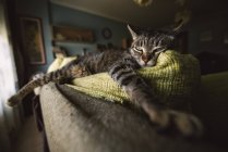 Tabby cat relaxing on couch — Stock Photo