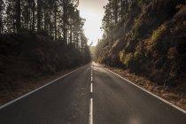 Espagne, Tenerife, route vide et forêt pendant la journée — Photo de stock