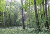 Вид на цветущий выкуп в национальном парке Хайнич, Германия — стоковое фото
