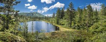 Sur de Noruega, Notodden, Noruega, Litfjel, vista del lago rodeado por árboles - foto de stock