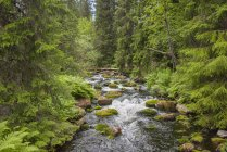 Sweden, Dalarna County, Fulufjaellet National Park, creek and forest during daytime — Stock Photo