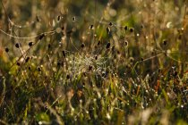 Германия, паутина утром — стоковое фото