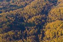 Deutschland, Baden-Württemberg, Luftaufnahme eines Waldes in der Schwäbischen Alb — Stockfoto