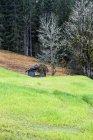 Austria, Salzburg State, Altenmarkt-Zauchensee, barn behind meadow at forest during daytime — Stock Photo