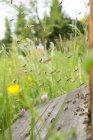 Німеччина, Баден-Вюртемберг, Ueberlingen, бджоли рояться бджоли полі — стокове фото