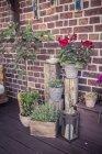 Plantes en pot sur la terrasse devant le mur — Photo de stock