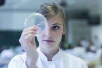 Jeune femme scientifique naturelle regardant la culture de bactéries dans une boîte de Pétri au laboratoire de microbiologie — Photo de stock