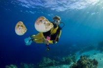 Buceador observando Palau nautilusses, Nautilus belauensis, en el Océano Pacífico - foto de stock