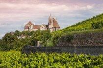 Германия, Баден-Вюртемберг, Брайзах, Эккартсберг виноградник и Breisach Minster на заднем плане — стоковое фото