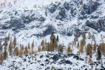 Austria, Salzburg State, Altenmarkt-Zauchensee, snow-capped cirque with larch trees — Stock Photo