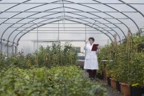 Female Scientist examining plants in greenhouse — Stock Photo