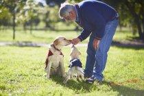 Человек тренирует двух собак-поводырей на газоне — стоковое фото