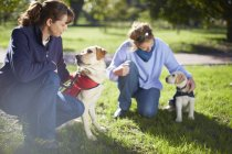 Women training two guide dogs on meadow — Stock Photo