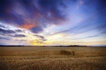 Royaume-Uni, Écosse, East Lothian, North Berwick, champ d'avoine, Avena sativa, au coucher du soleil — Photo de stock