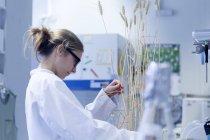Jovem cientista trabalhando em laboratório com plantas — Fotografia de Stock