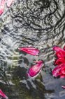 Top daytime view of pink flower petals on clear water surface — Stock Photo