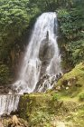 Водопад в зеленом лесу — стоковое фото