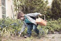 Little boy with basket picking Easter egg — Stock Photo