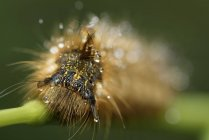 Close-up of caterpillar moving by green blade of grass, blurred background — Stock Photo