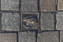 Німеччина, Нижня Саксонія, Hameln, cobblestone з щур — стокове фото