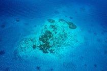 Oceanía, Palaos, Océano Pacífico, Arrecife de coral durante el día - foto de stock