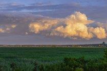 Austria, Burgenland, Moerbisch, paisaje de Panonia con parque del viento y las nubes de tormenta de truenos pesada, cielo de noche - foto de stock