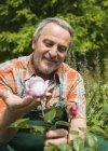 Портрет старшего садовника, смотрящего на цветок розы — стоковое фото