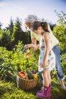 Grandmother and granddaughter working in vegetable garden — Stock Photo
