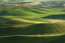 USA, Washington State, Luftaufnahme, Felder und grünen Hügeln von Palouse — Stockfoto