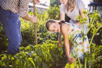 Family working in vegetable garden together — Stock Photo