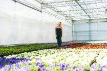 Жінка в розпліднику дивлячись квіти — стокове фото