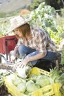 Ciudad del cabo, raíces de corte femenino jardinero de col - foto de stock