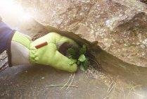 Bild der Gärtner entfernen Unkraut beschnitten — Stockfoto