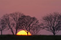 Scenic view of evening sun and trees at sunset Bavaria, Germany, — Stockfoto