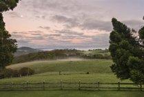 Australien, neue Südwales, Dorrigo, Wiesen im Dorrigo Nationalpark im Morgengrauen — Stockfoto