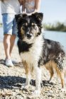 Dog with wet fur standing at riverside — Stock Photo