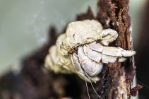 Crabe au tronc d'arbre sur fond flou — Photo de stock