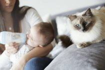 Young mother bottle-feeding baby with cat on couch — Stock Photo