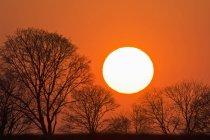Vista panorámica del sol y los árboles al atardecer Baviera, Alemania , - foto de stock