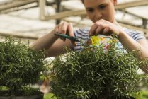 Young female gardener working in plant nursery — Stock Photo