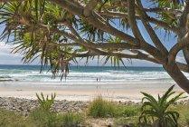Австралія, новий Південний Уельс, Байрон Бей, розбитою головою заповідника, дерево капусти (Cordyline australis) і видом на пляж — стокове фото