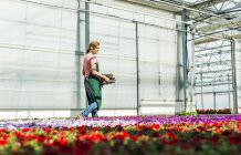 Woman in nursery carrying tray with flowers — Stock Photo
