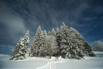 View of winter landscape with frozen trees in winter at Black Forest, Baden-Wuerttemberg, Feldberg, Germany — Stock Photo