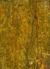 Africa, Namibia, detail of petrified wood — Stock Photo