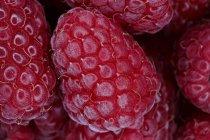 Primer plano de las frambuesas frescas maduras en un montón - foto de stock
